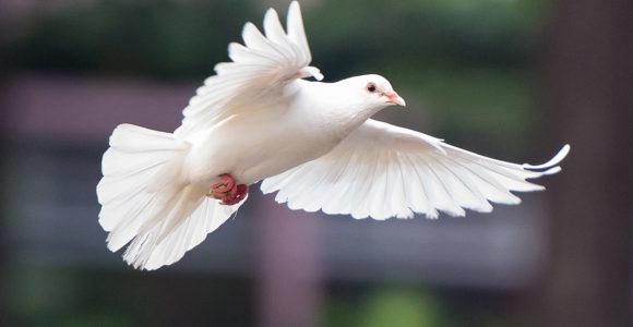 Tekkies Aktiwiteit – 7 Desember 2020: Advent – Vrede
